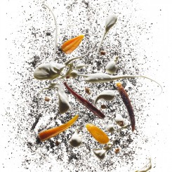 195 Carrots Roasted in Coffee Beans edit