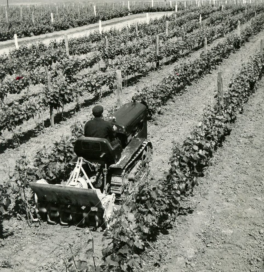 man driving a machine through a vineyard