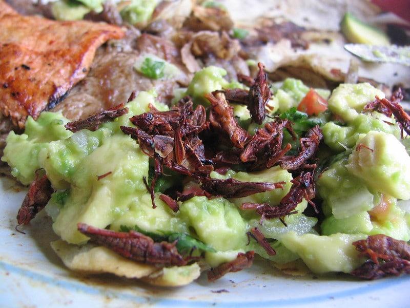 Guacamole con Chapulines