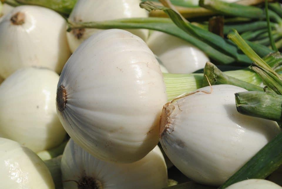 Florida Sweet Onions