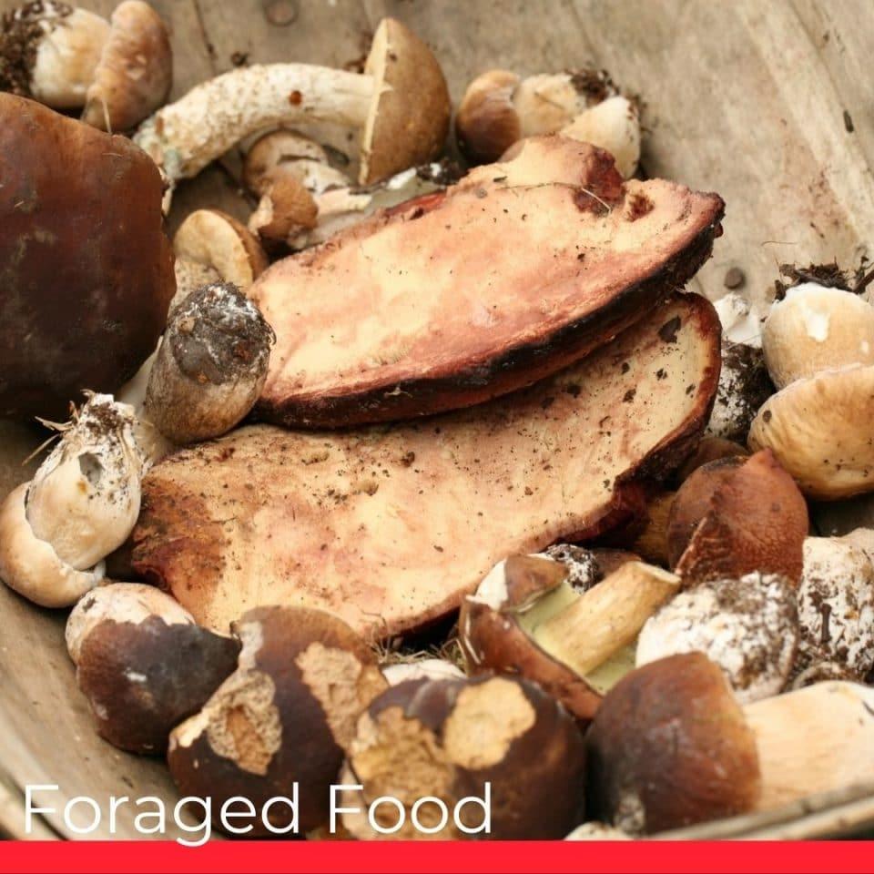 Foraged Food