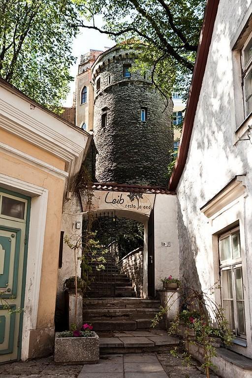 Leib, Tallinn