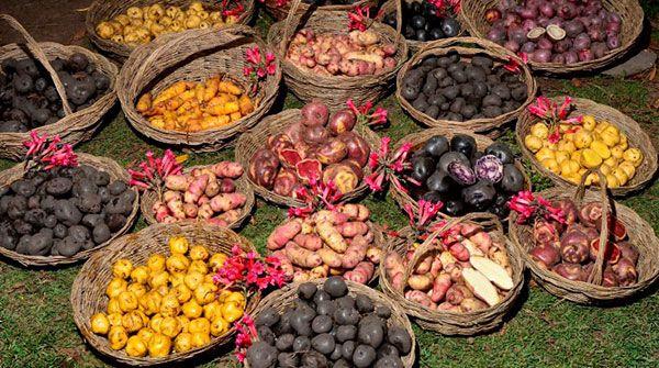 Peru`s National Potato Day