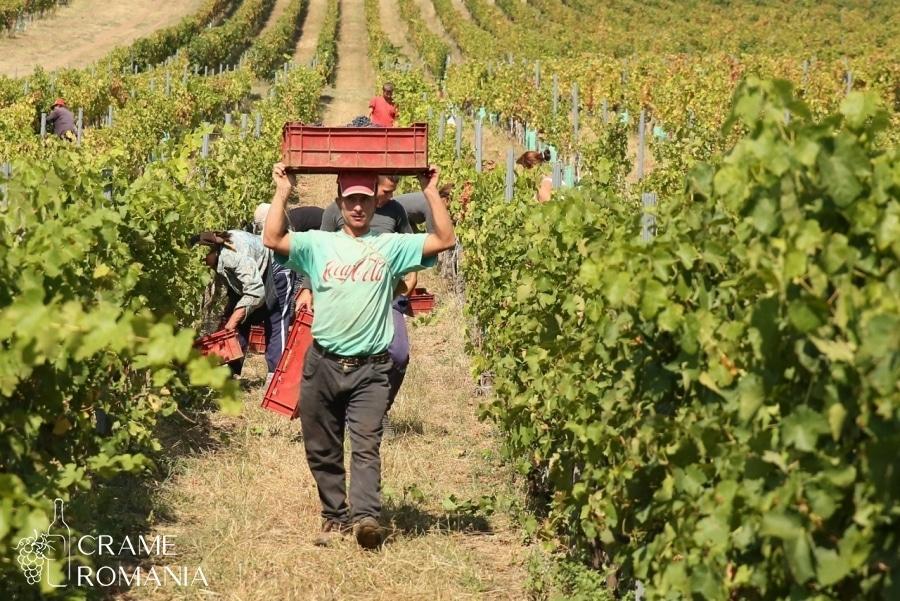 Romanian Winery