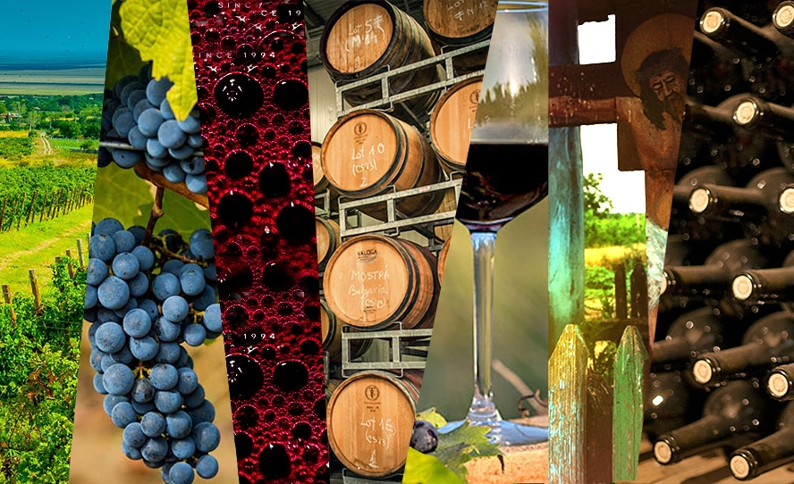 collage of wine related images