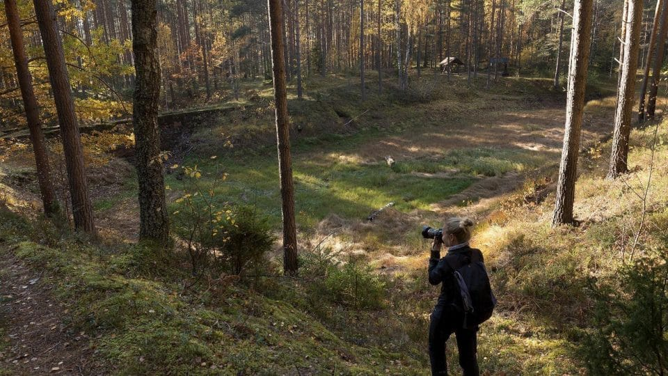 You can capture beautiful views at Lõunalaagri hiking trail ; Photo credit: https://www.visitestonia.com/